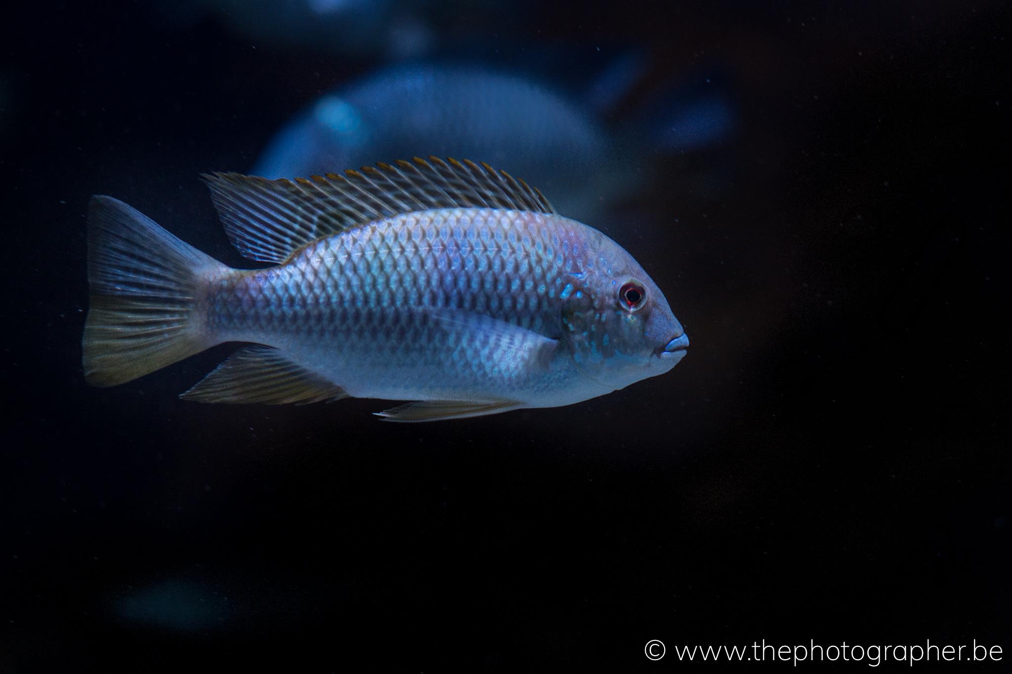 tropische vissen in de zoo van Antwerpen