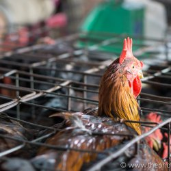 Levende dieren op de markt in Hoi An, Vietnam
